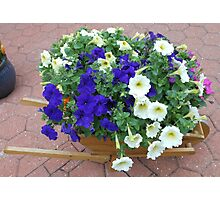 Wheelbarrow Floral Display Photographic Print