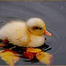 Autumn baby by Jacky