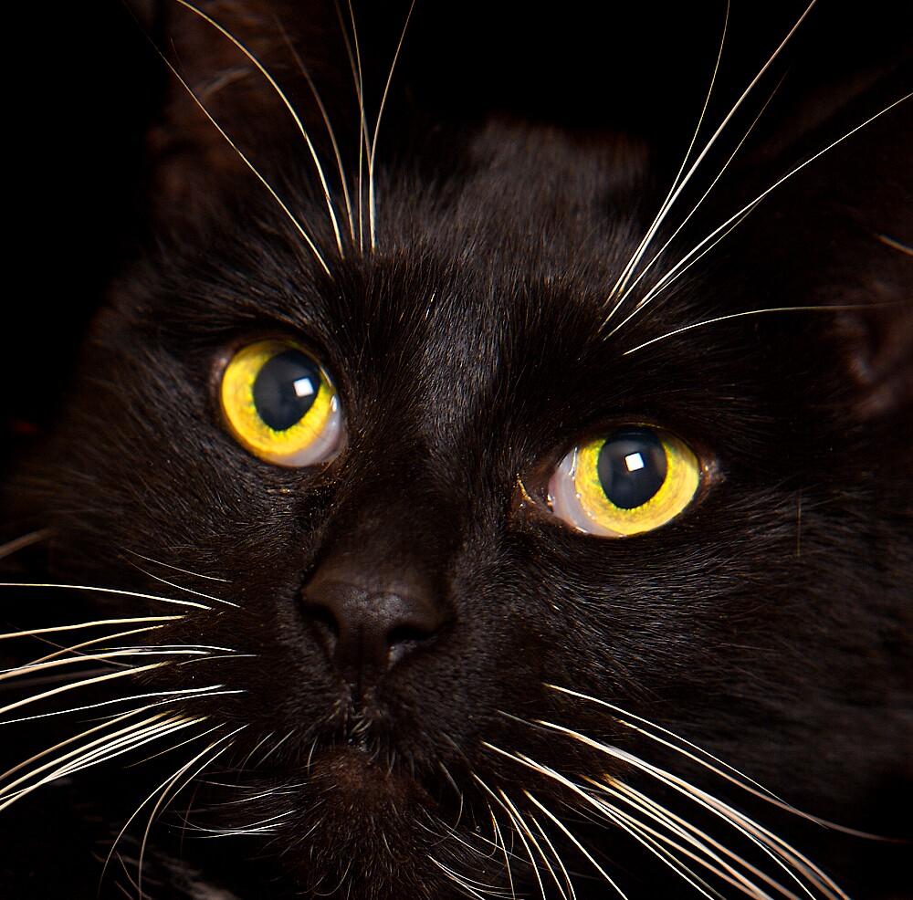 Feline Fine by scritti