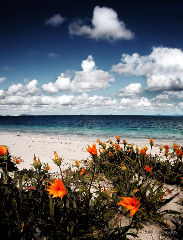 Flowers on the beach by Rudy Labordus