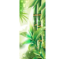 Bamboo Plants Photographic Print