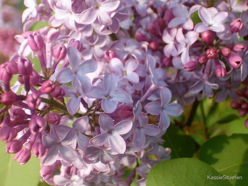 purple happiness by KassieStuefen
