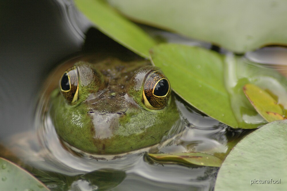 Ribbit by picturefool