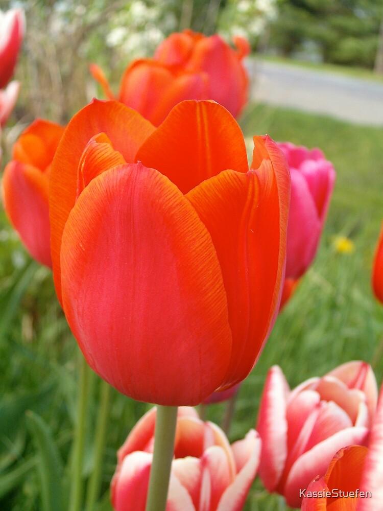 spring by KassieStuefen