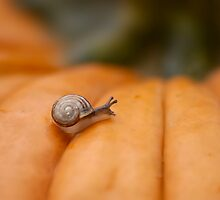 Tiny Slimy by Leisa  Hennessy