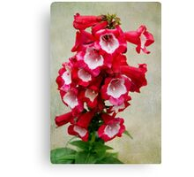 Red and White Penstemon Canvas Print