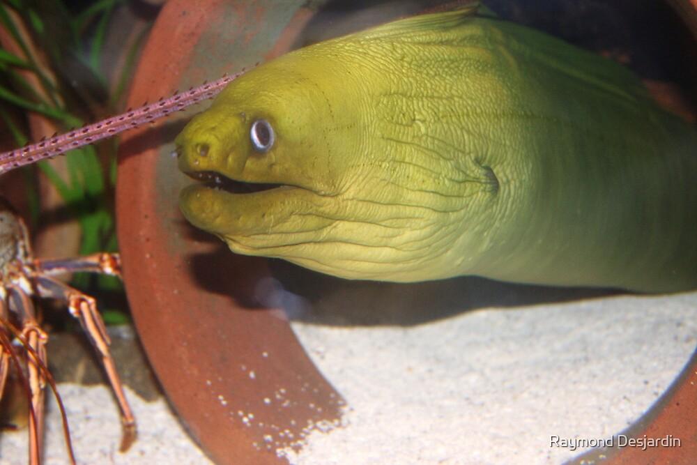 eel by Raymond Desjardin