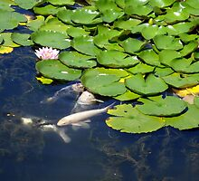 Koi and Lilly pad by Gregory Ewanowich