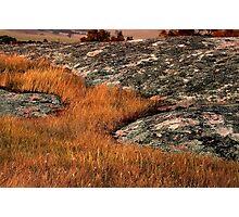 """Grass Stream"" Photographic Print"