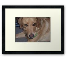 gypsy and the green eyed monster when it comes to his ball. Framed Print
