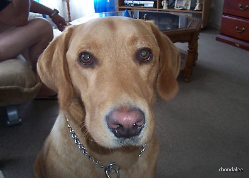 my gypsy dog by rhondalee