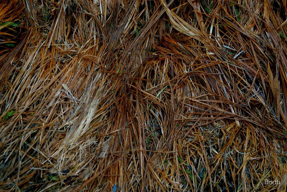 Grass by Borth