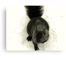 Black Squirrel in Snow Canvas Print