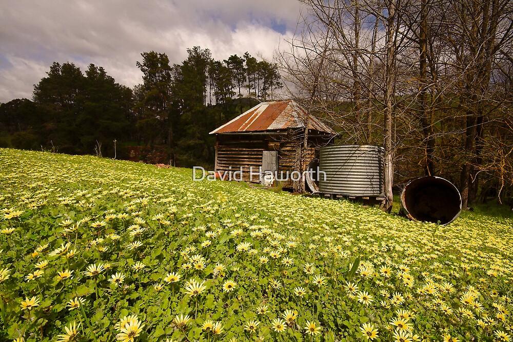 Daisy Hill by David Haworth