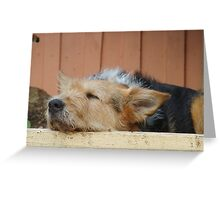 Leave Sleeping Dogs Lie Greeting Card