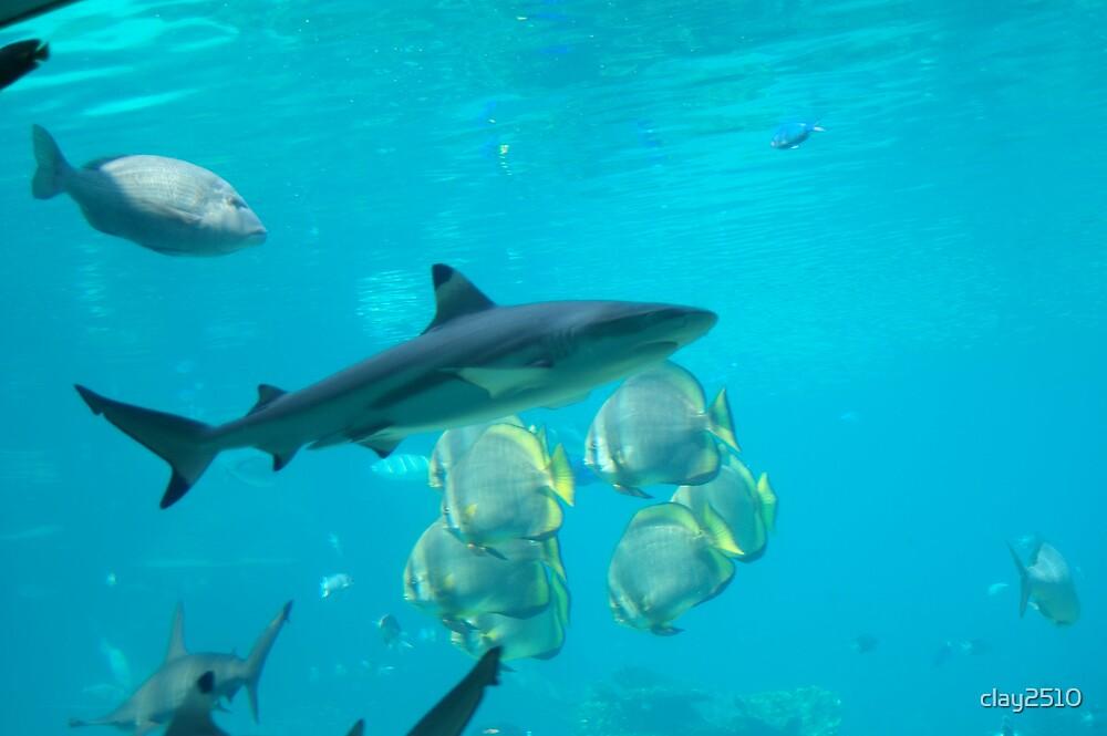 Shark #3 by clay2510