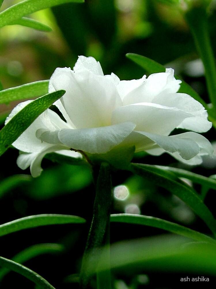 white flower by ash ashika
