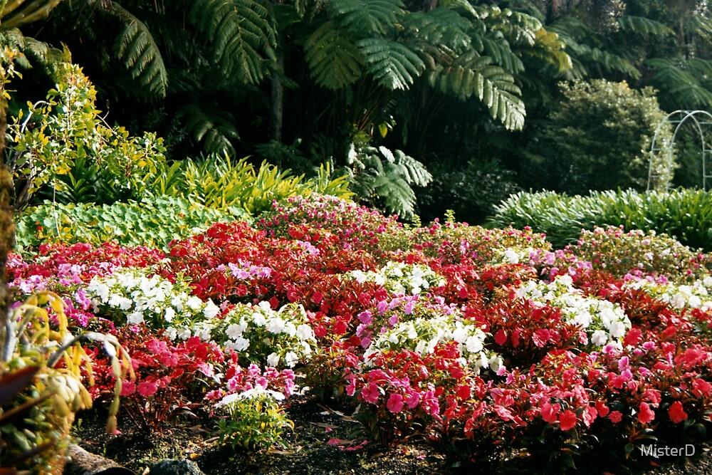 Hawai'ian hibiscus by MisterD