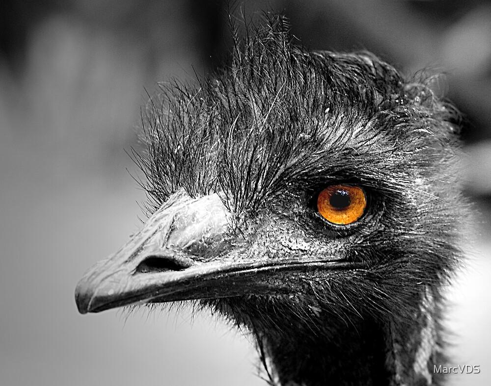 Ostrich by MarcVDS