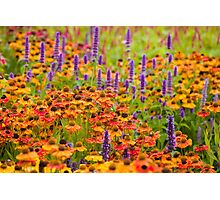 Harlow Carr - Herbaceous Border Photographic Print
