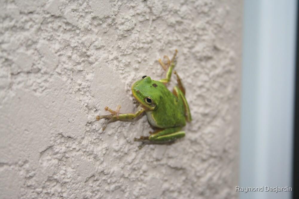 frog by Raymond Desjardin
