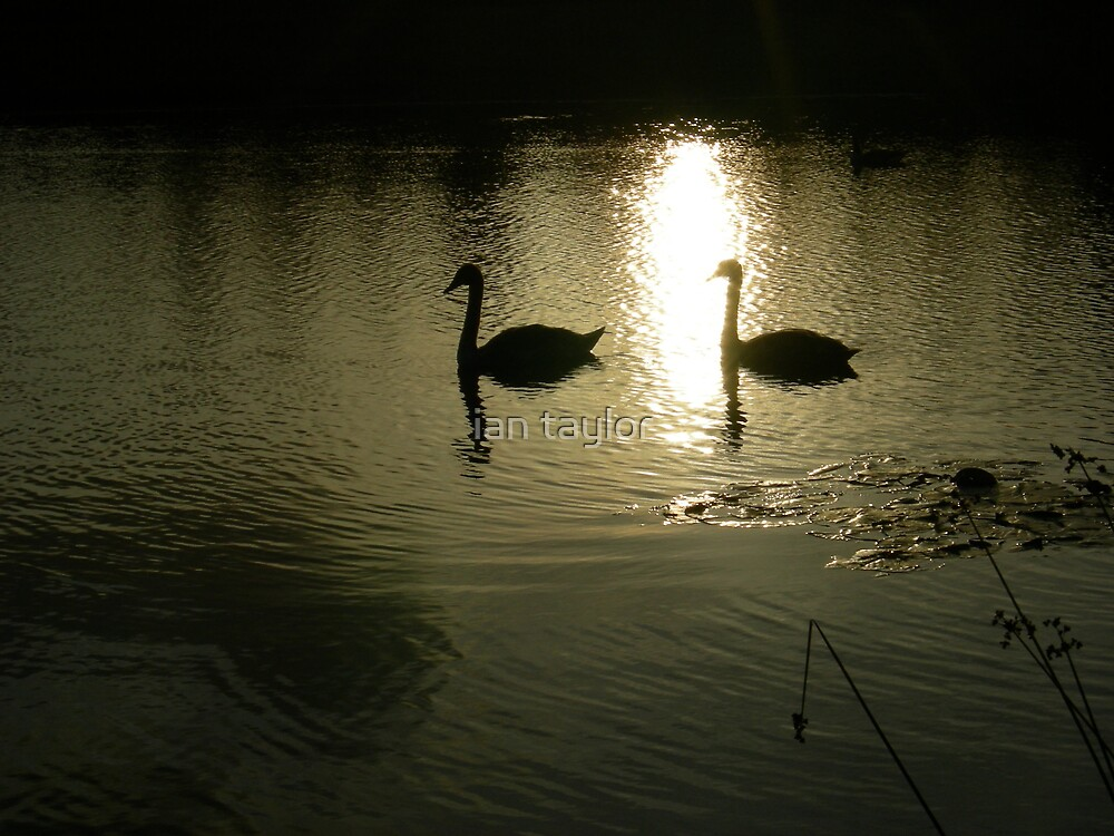 NIGHT TIME SWIM by ian taylor