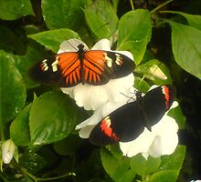 Butterfly 1 by SMDArt