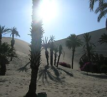 Desert Palm by bms2tjb