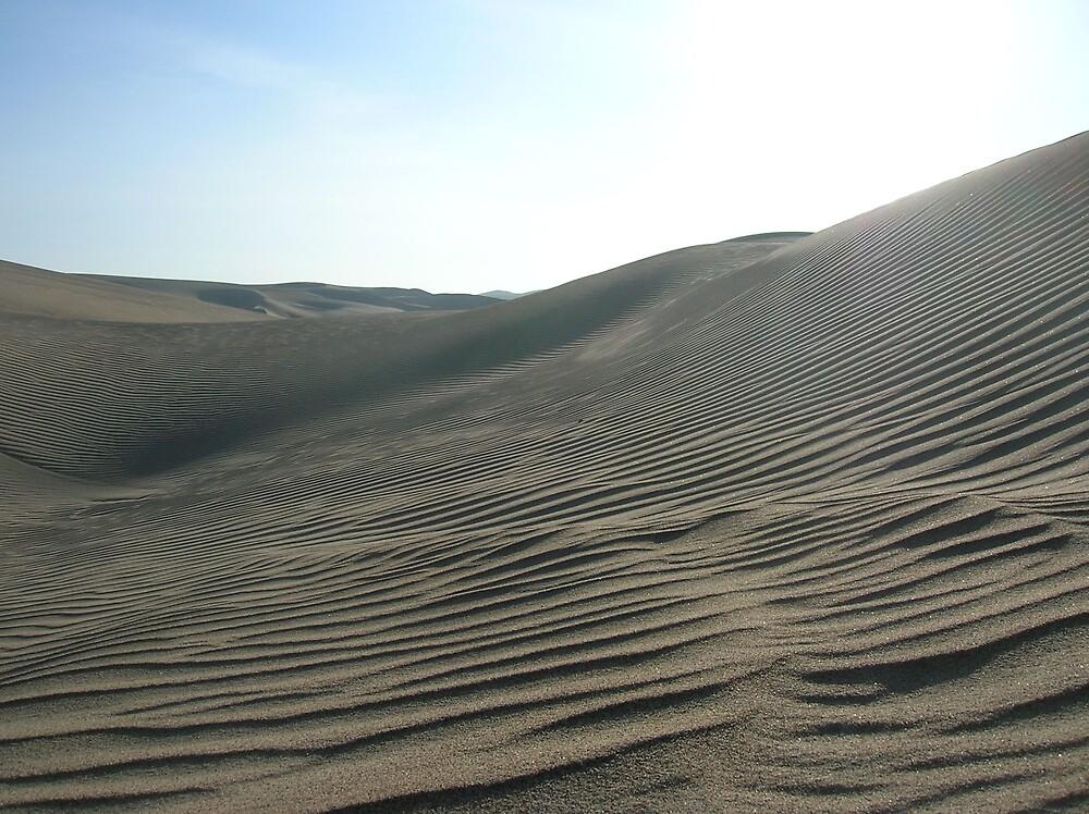 Zebra Sands by bms2tjb