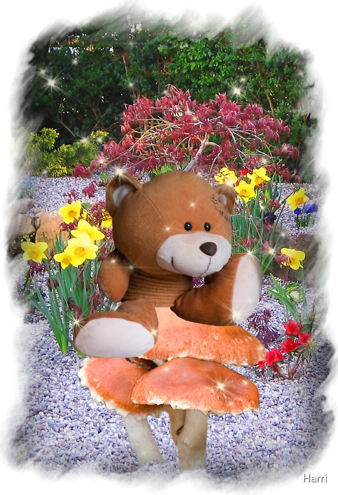 Spring Bear by Harri