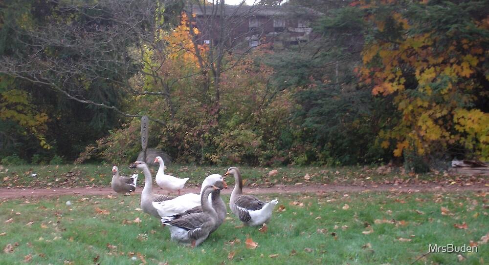 Ducks of autumn by MrsBuden