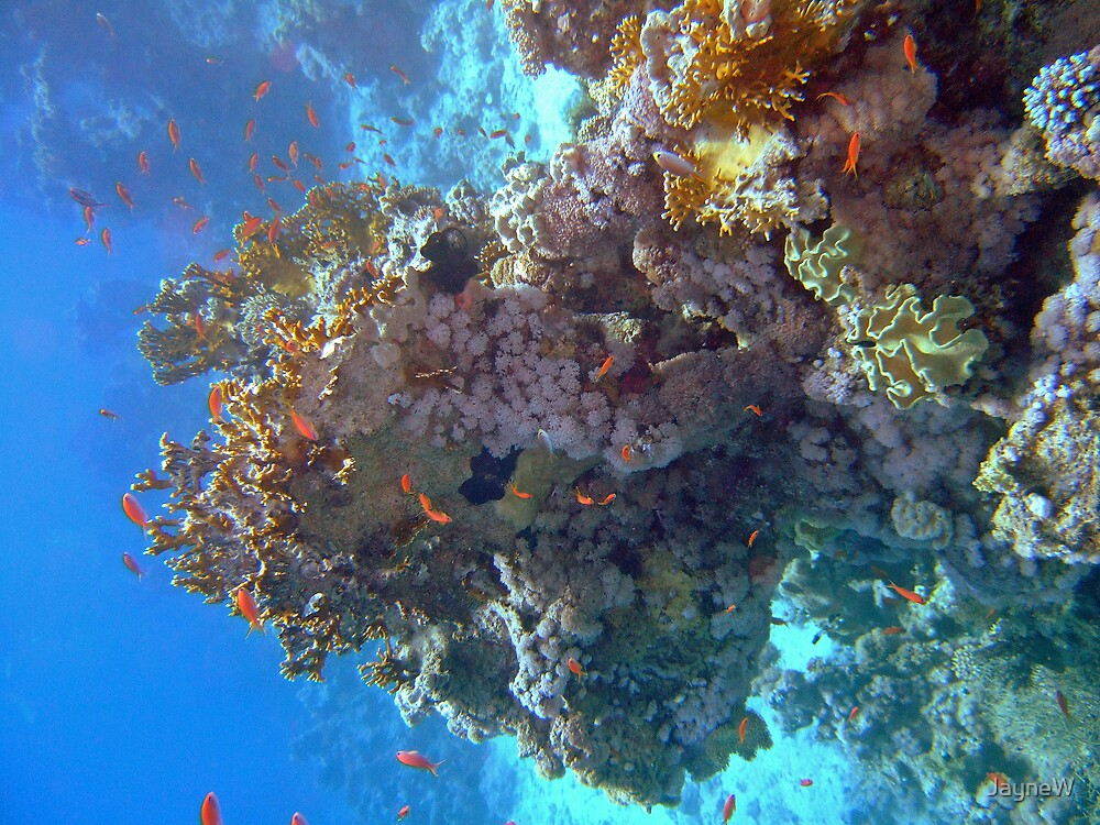 Coral Pinicle by JayneW