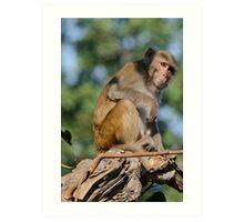Monkey in Thought Art Print