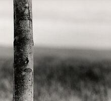 Tree by Ashley Mann