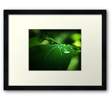 The Nature of Tranquility Framed Print