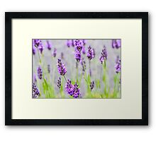 Nature: 'Lavender, Barbizon, France' Framed Print