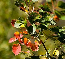 Fall Color by Mel Milne