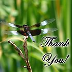 Dragonfly Thank You by Sheryl Kasper