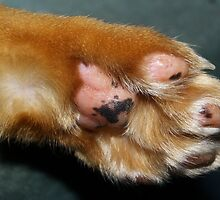 Pinky Paw by Deborah  Bowness