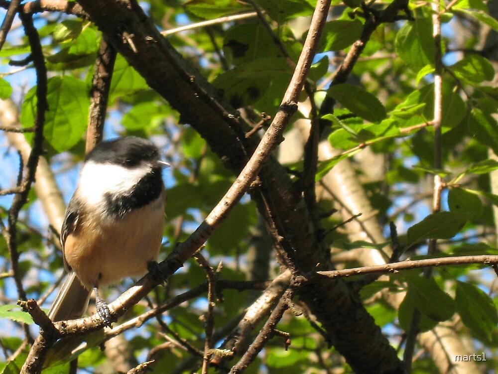 Here birdie 1 by marts1
