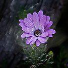 Frozen Beauty by Al Bourassa