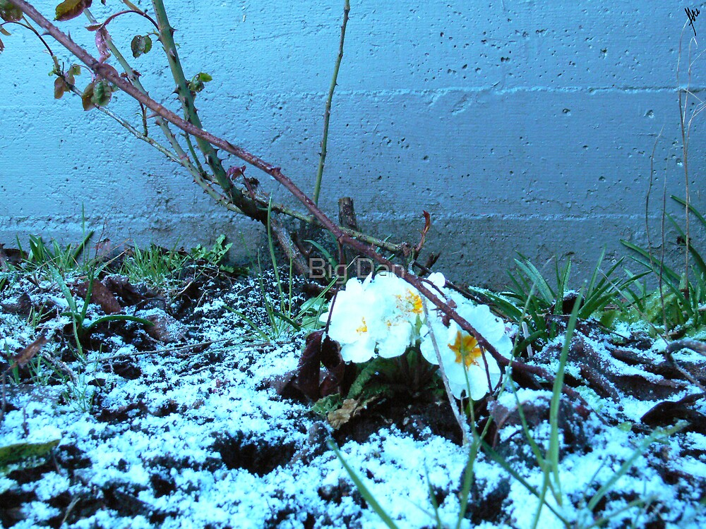 Frosty the Flower by Tate ©