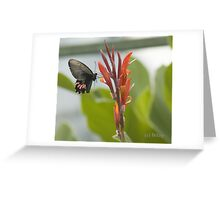 Butterfly to go Greeting Card