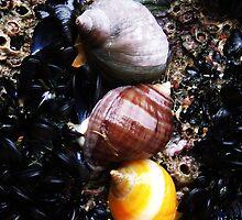 Trio of Shells by Mark Wilson