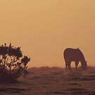 Horse Grazing on the Moors by Mark Wilson