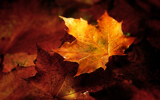 Autumn by Annette Blattman
