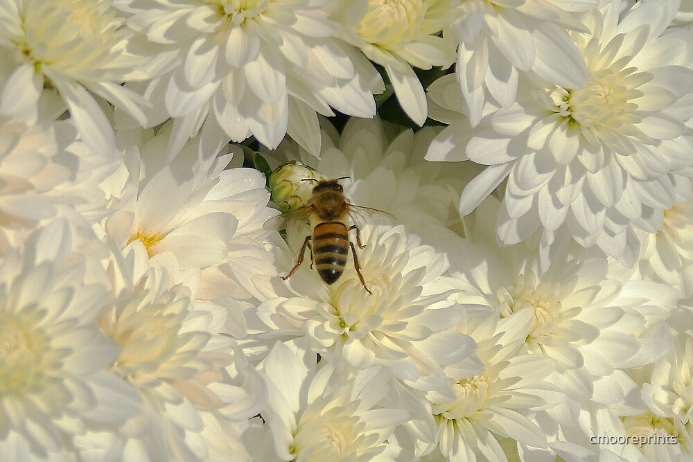 Bee in a sea of white... by cmooreprints