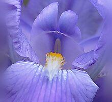 Paint it Purple by cdwork
