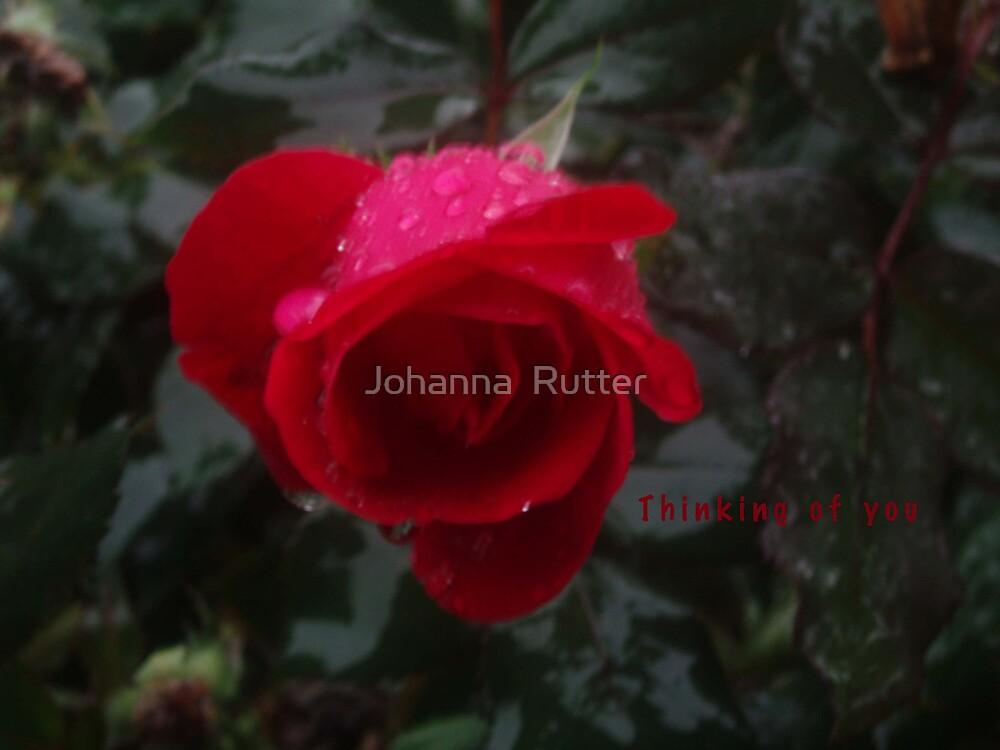 Thinking of you by Johanna  Rutter