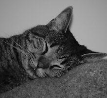 catnap by spyonu
